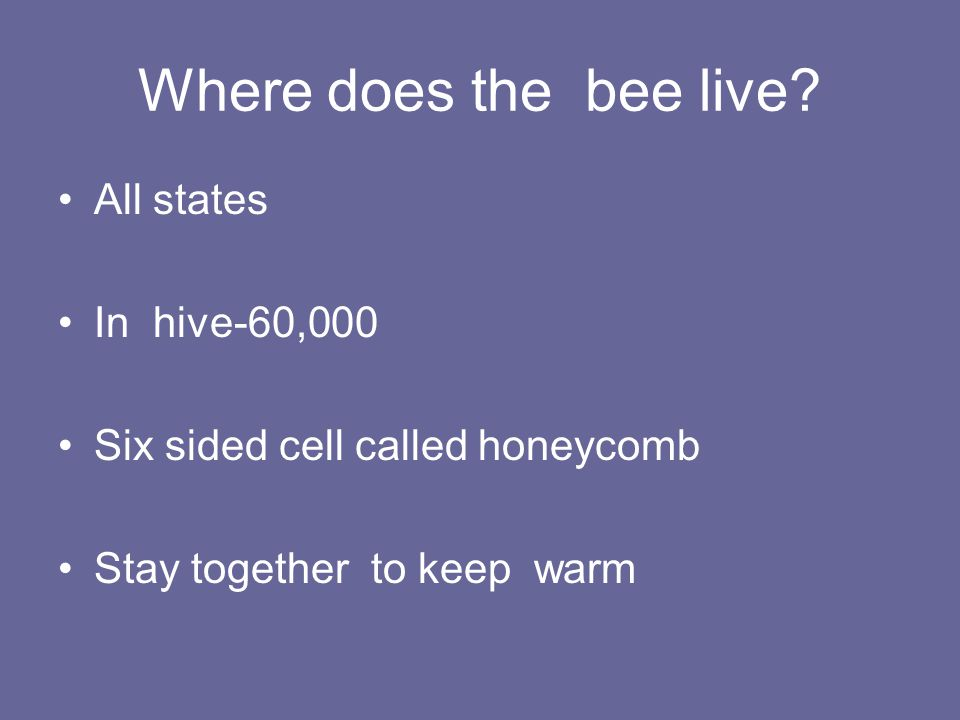 Where does the bee live All states In hive-60,000