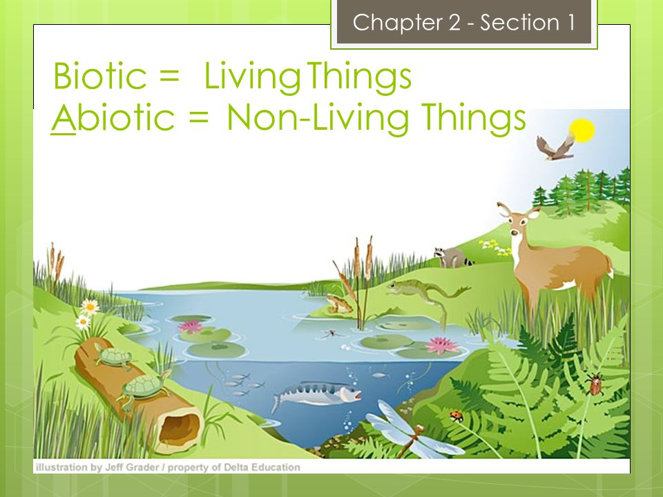 Biotic = Living Things Abiotic = Non-Living Things