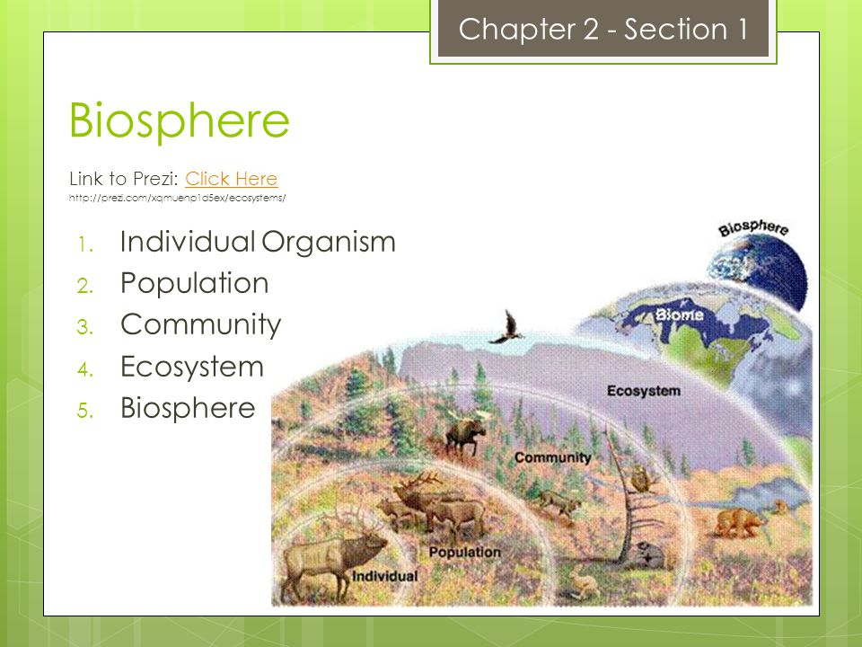 Biosphere Chapter 2 - Section 1 Individual Organism Population