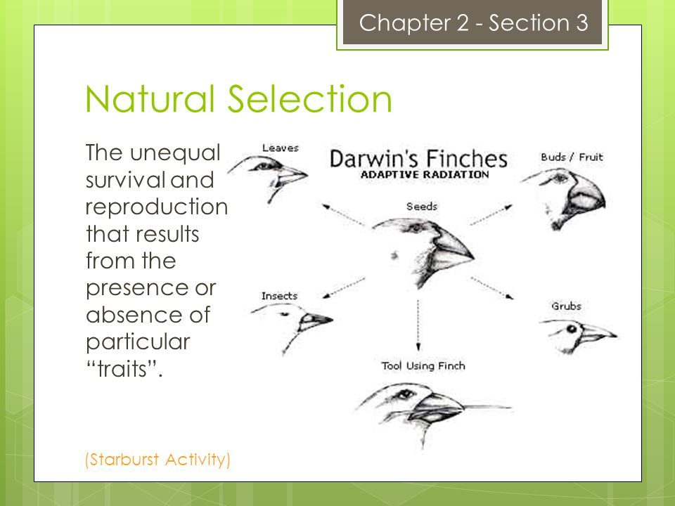 Natural Selection Chapter 2 - Section 3