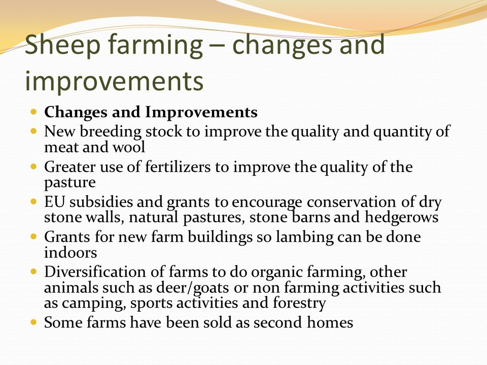 Sheep farming – changes and improvements