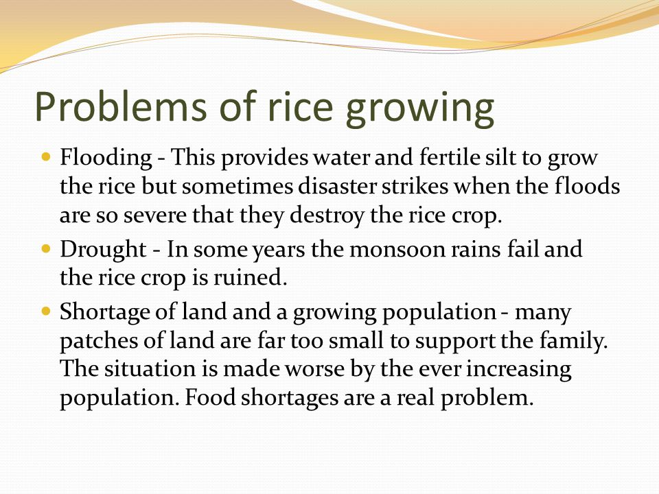 Problems of rice growing
