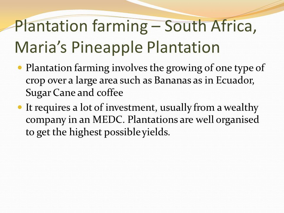 Plantation farming – South Africa, Maria's Pineapple Plantation