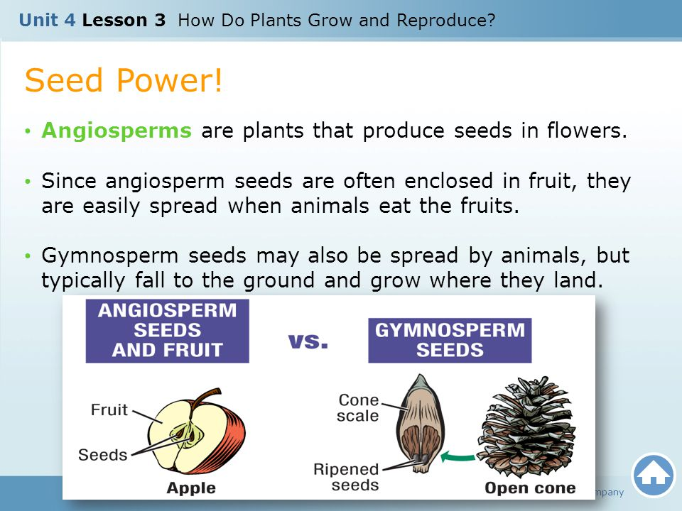 Seed Power! Angiosperms are plants that produce seeds in flowers.