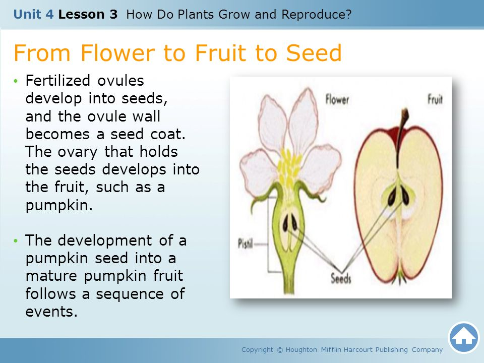 From Flower to Fruit to Seed