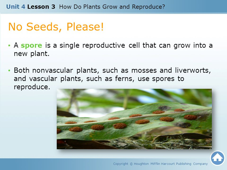 Unit 4 Lesson 3 How Do Plants Grow and Reproduce