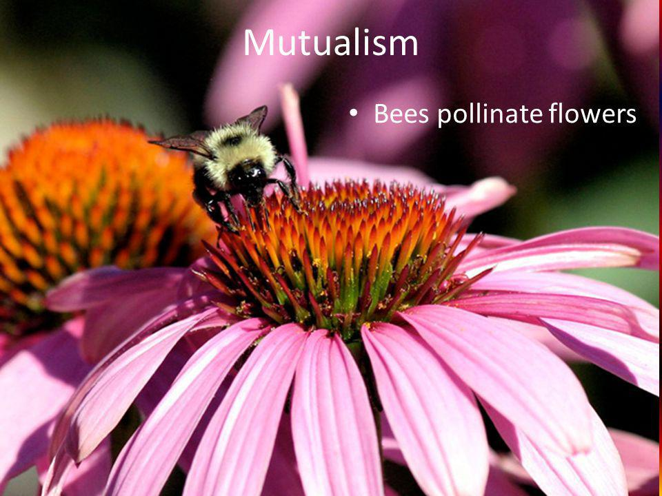 Mutualism Bees pollinate flowers