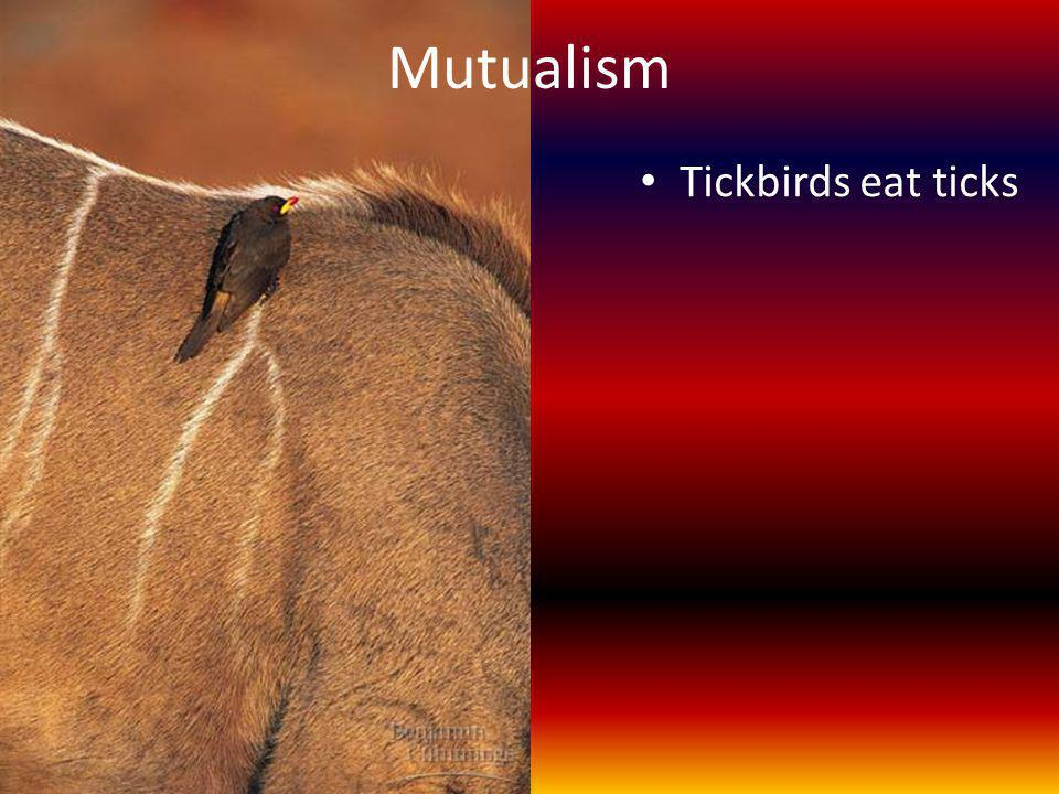 Mutualism Tickbirds eat ticks