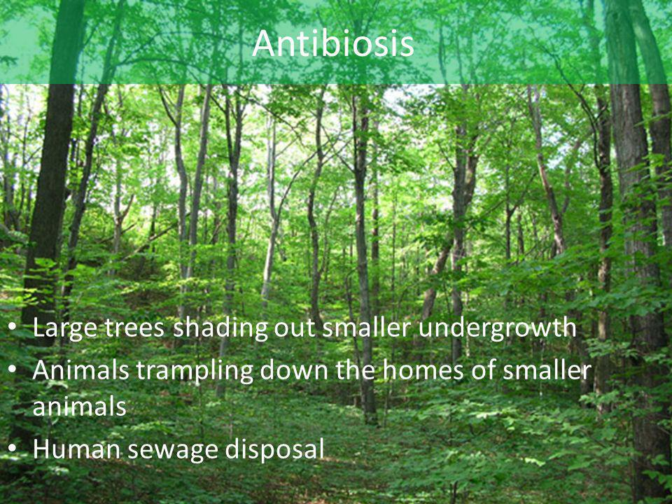 Antibiosis Large trees shading out smaller undergrowth