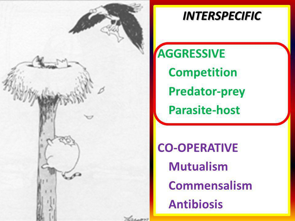 INTERSPECIFIC AGGRESSIVE. Competition. Predator-prey. Parasite-host. CO-OPERATIVE. Mutualism. Commensalism.
