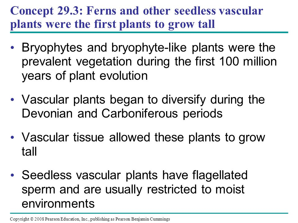 Concept 29.3: Ferns and other seedless vascular plants were the first plants to grow tall