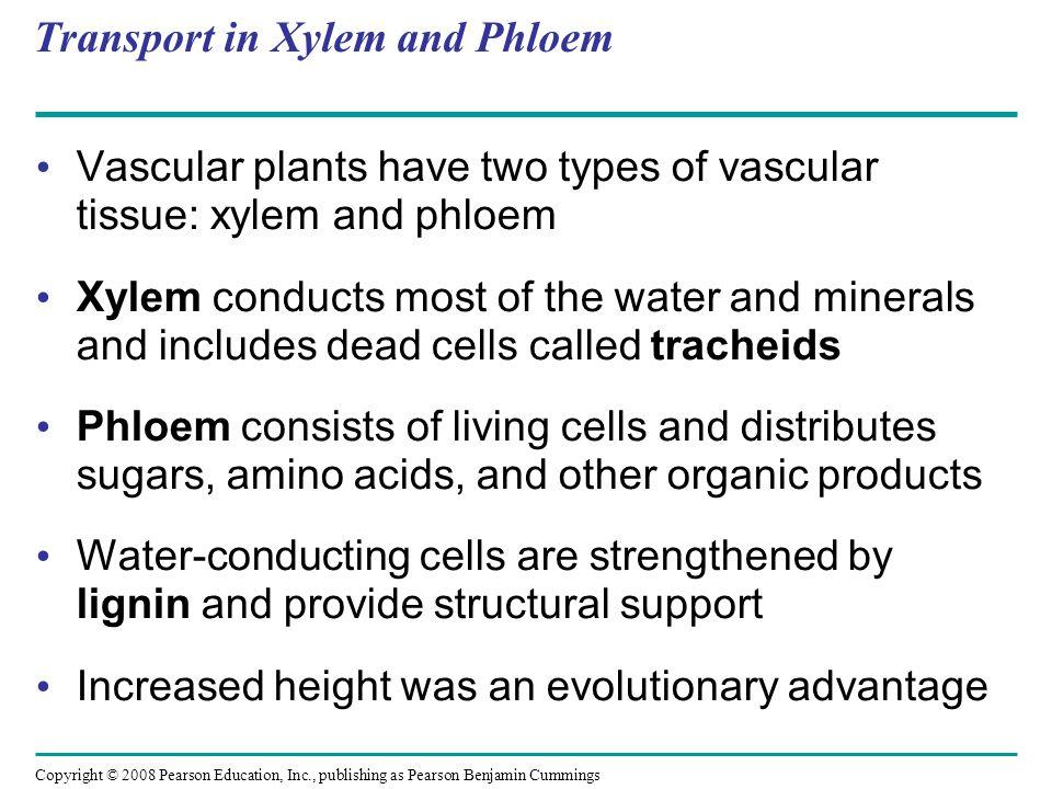 Transport in Xylem and Phloem