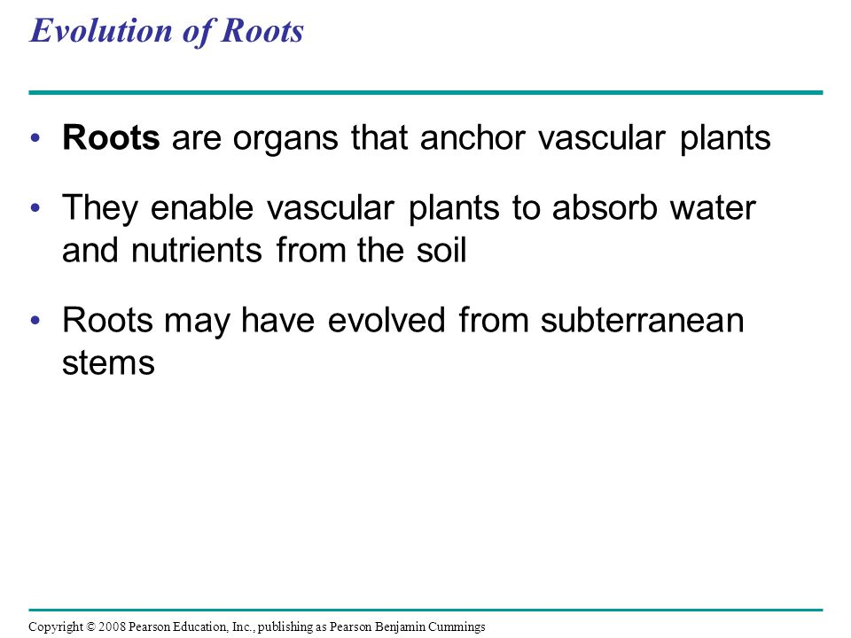 Evolution of Roots Roots are organs that anchor vascular plants. They enable vascular plants to absorb water and nutrients from the soil.