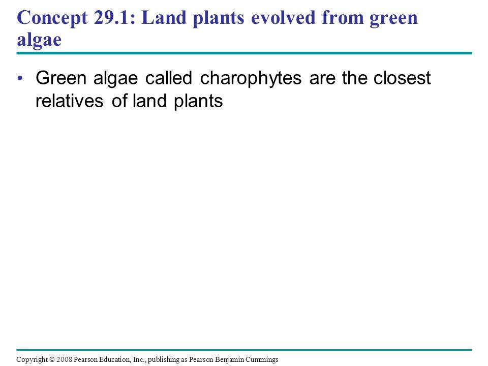 Concept 29.1: Land plants evolved from green algae