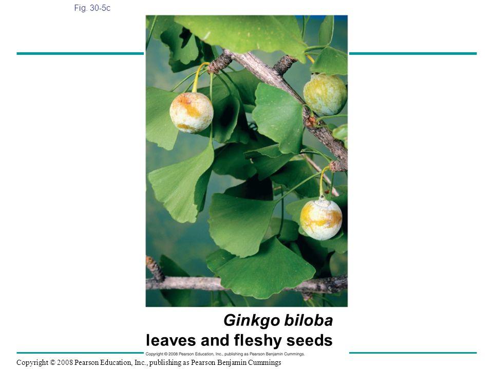 Ginkgo biloba leaves and fleshy seeds