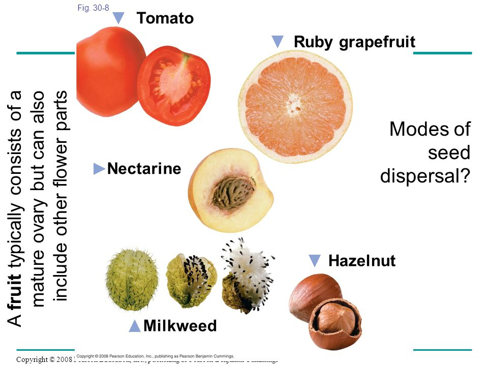 Modes of seed dispersal
