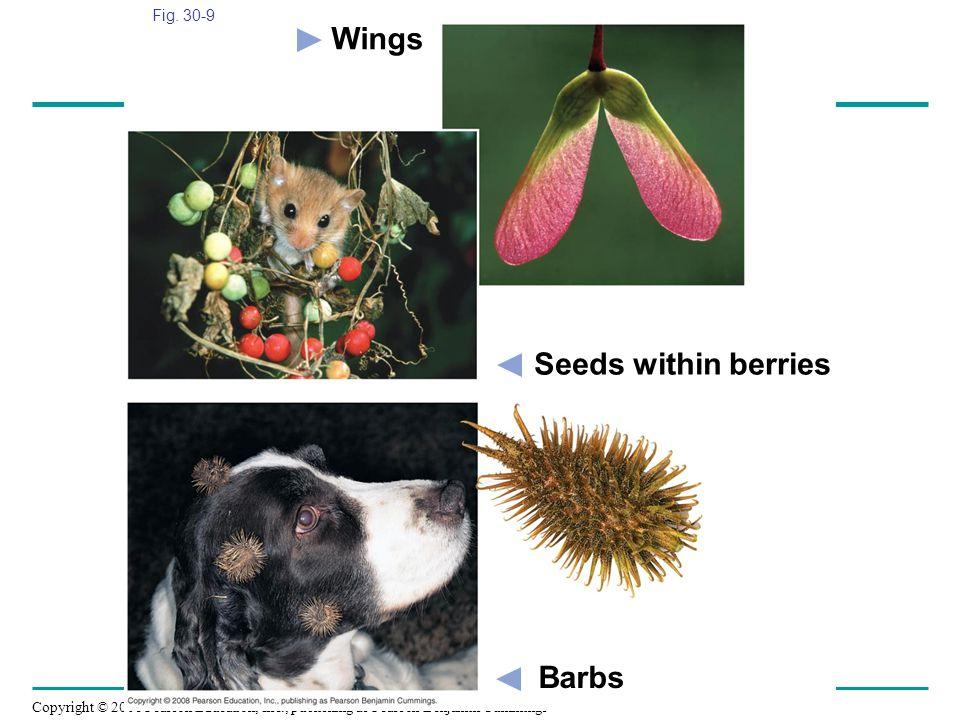 Wings Seeds within berries Barbs Fig. 30-9