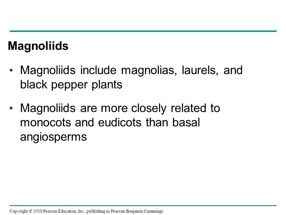 Magnoliids Magnoliids include magnolias, laurels, and black pepper plants.