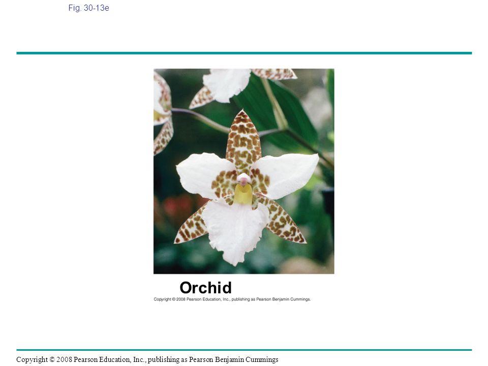 Fig. 30-13e Figure 30.13 Angiosperm diversity Orchid