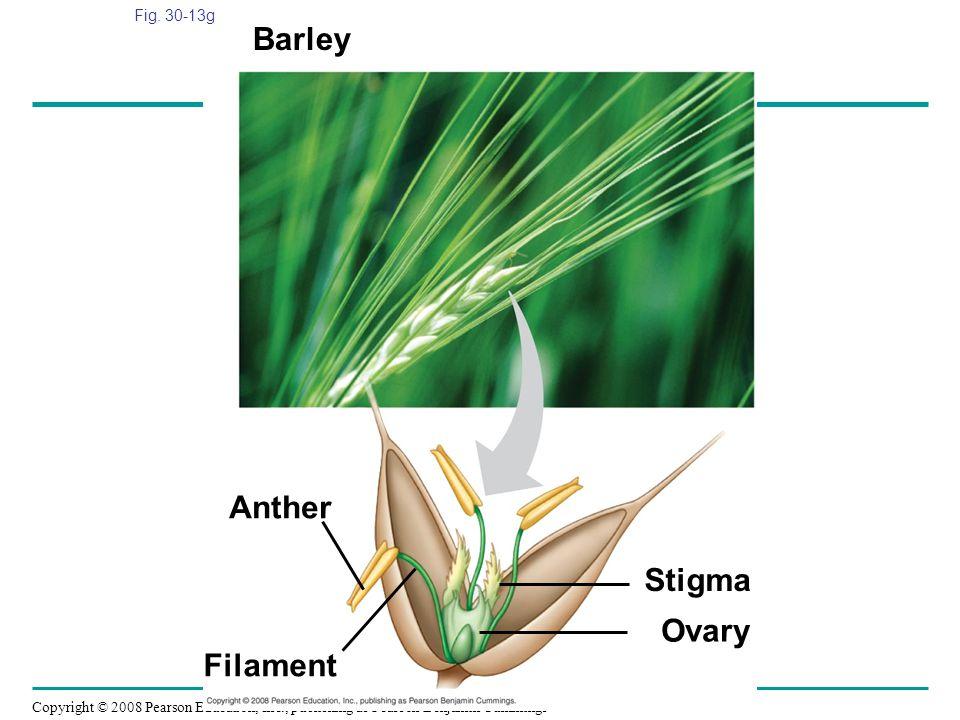 Barley Anther Stigma Ovary Filament Fig. 30-13g