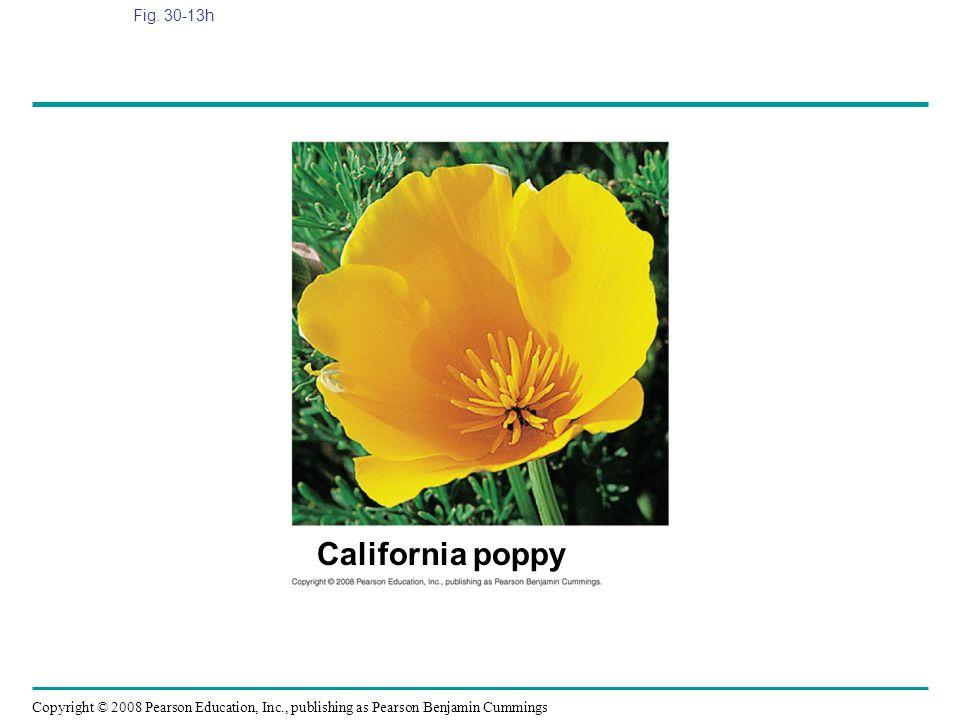 Fig. 30-13h Figure 30.13 Angiosperm diversity California poppy