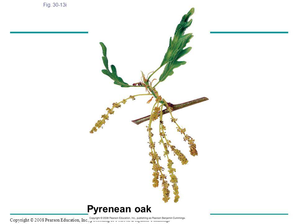 Fig. 30-13i Figure 30.13 Angiosperm diversity Pyrenean oak
