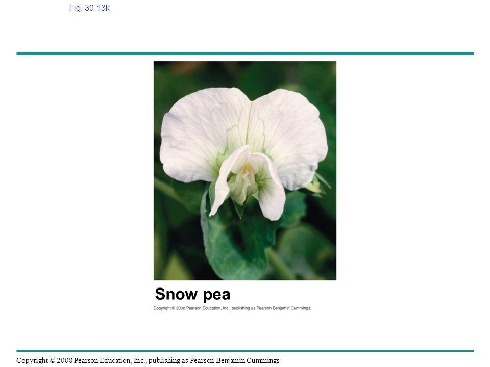 Fig. 30-13k Figure 30.13 Angiosperm diversity Snow pea