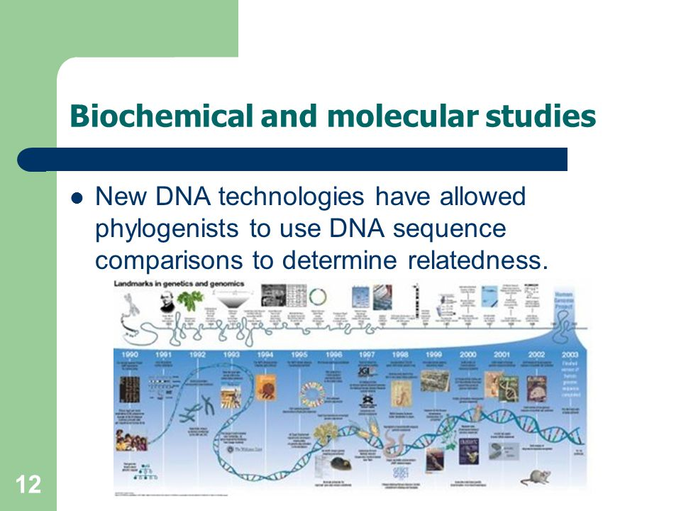 Biochemical and molecular studies