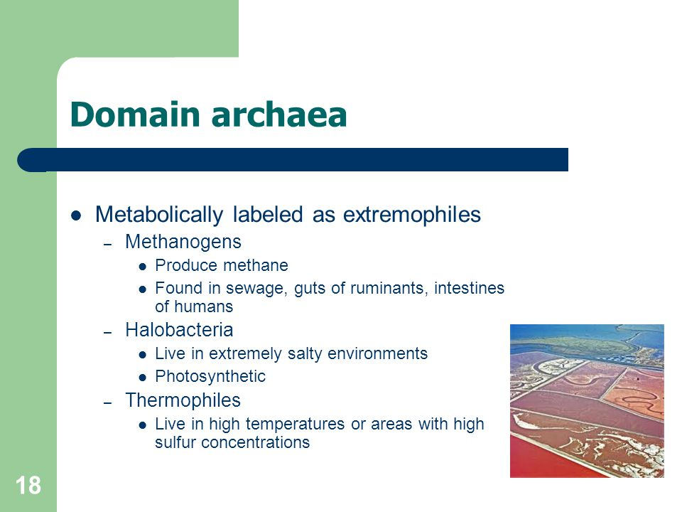Domain archaea Metabolically labeled as extremophiles Methanogens