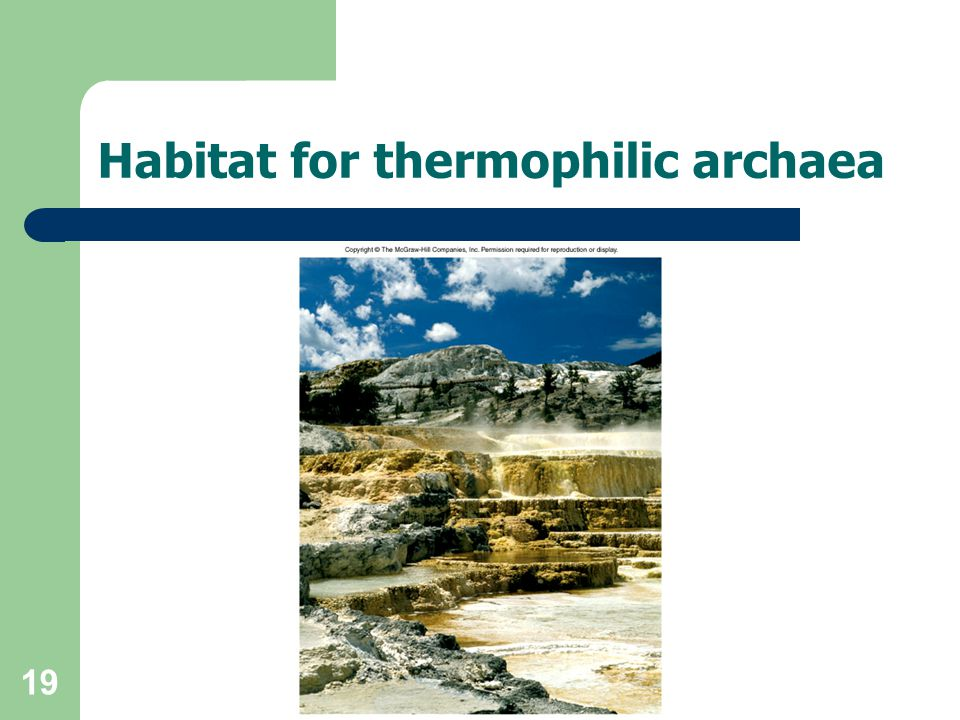 Habitat for thermophilic archaea