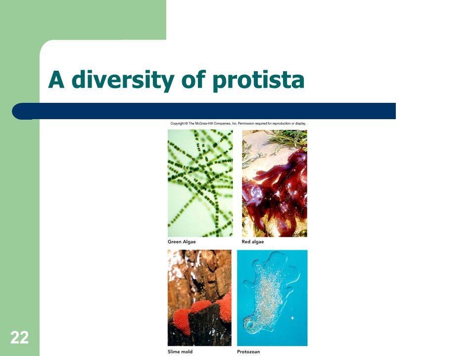 A diversity of protista