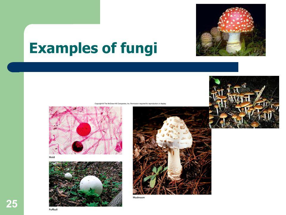 Examples of fungi