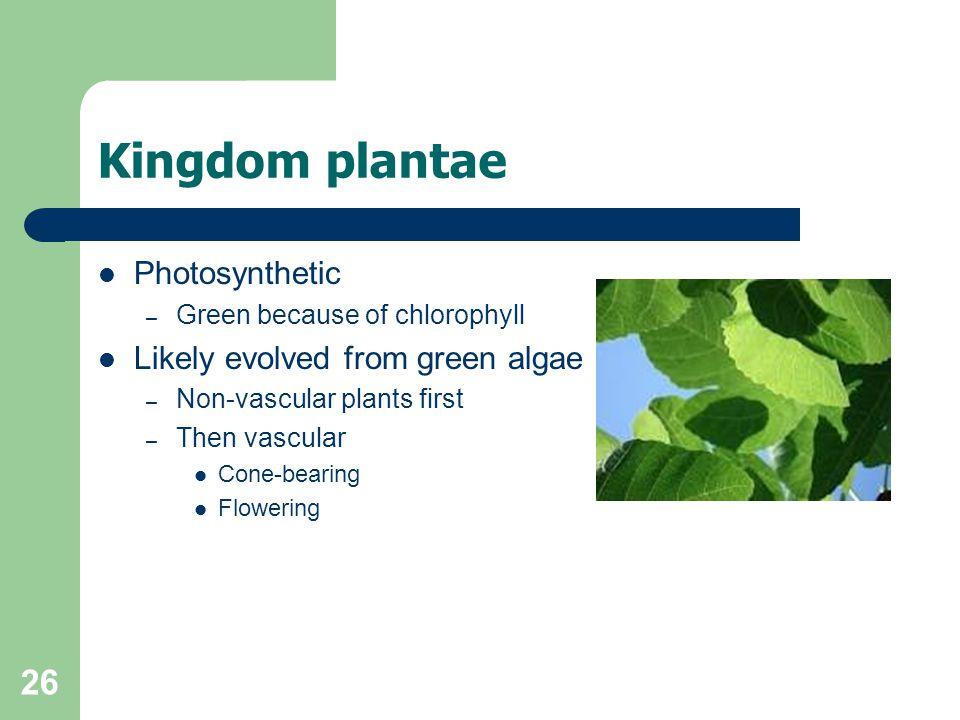 Kingdom plantae Photosynthetic Likely evolved from green algae