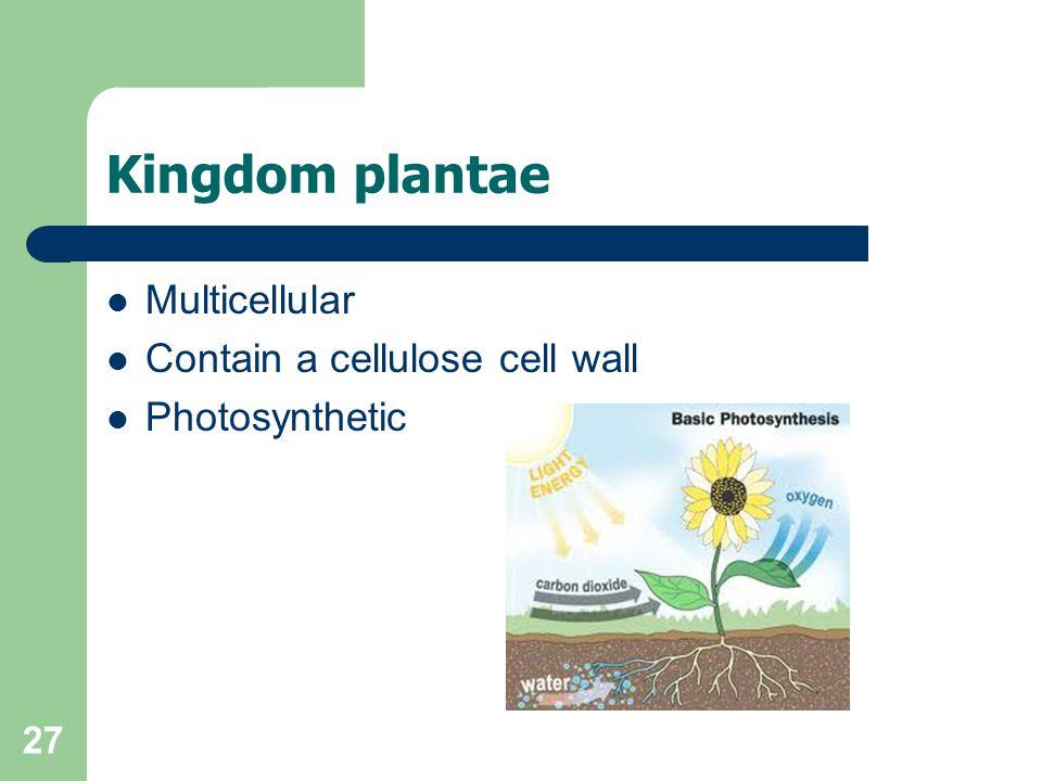 Kingdom plantae Multicellular Contain a cellulose cell wall