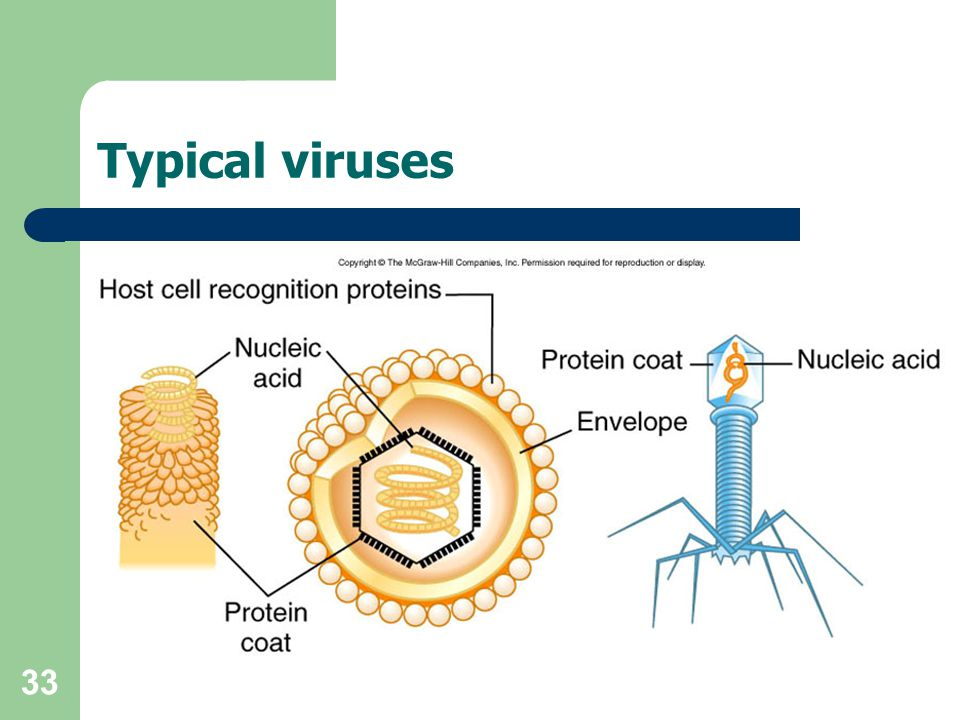 Typical viruses