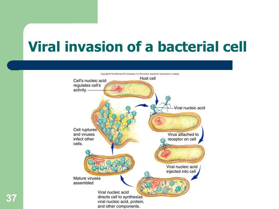 Viral invasion of a bacterial cell