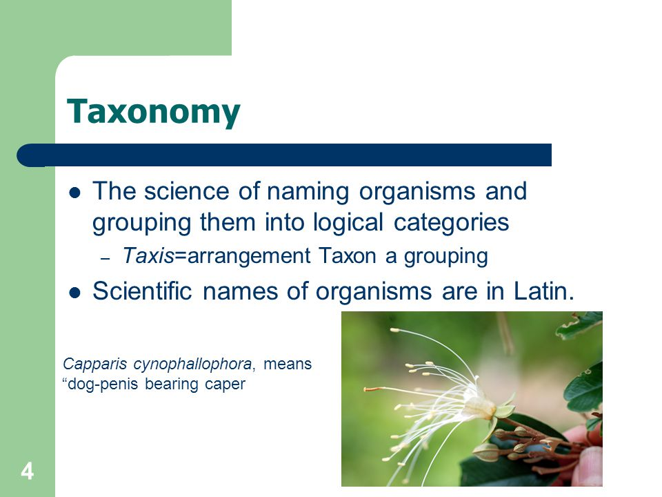 Taxonomy The science of naming organisms and grouping them into logical categories. Taxis=arrangement Taxon a grouping.