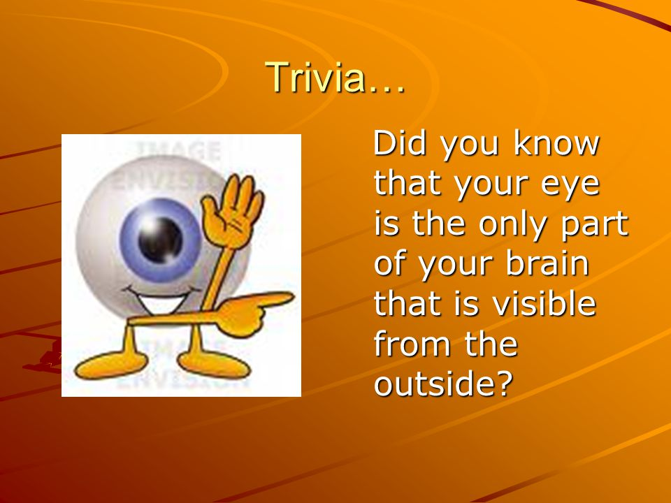 Trivia… Did you know that your eye is the only part of your brain that is visible from the outside