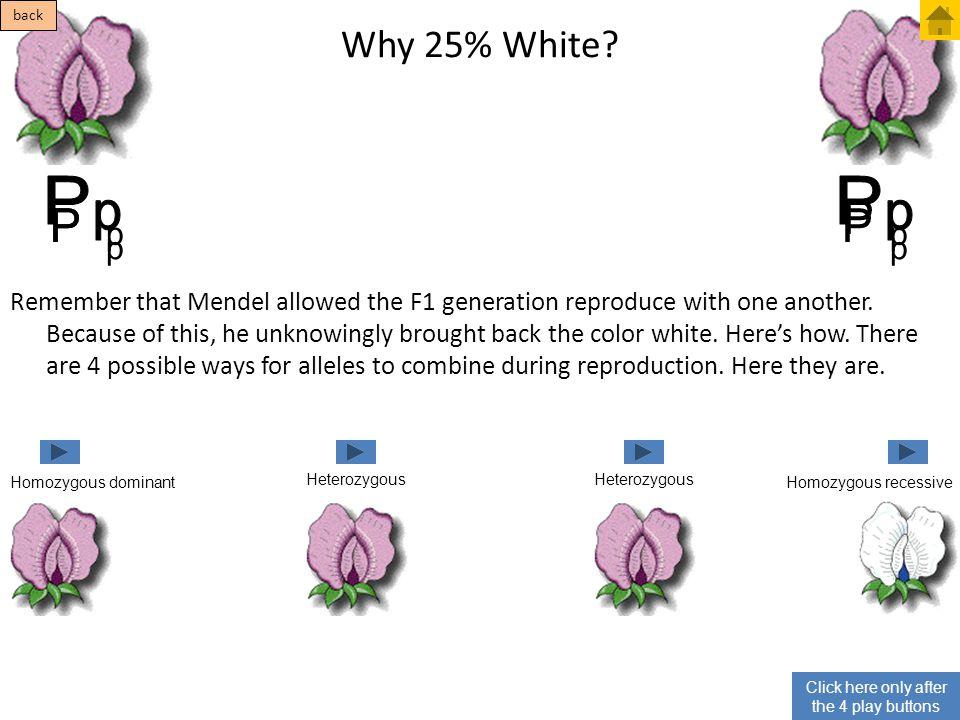 P P p p P P P P Why 25% White p p p p