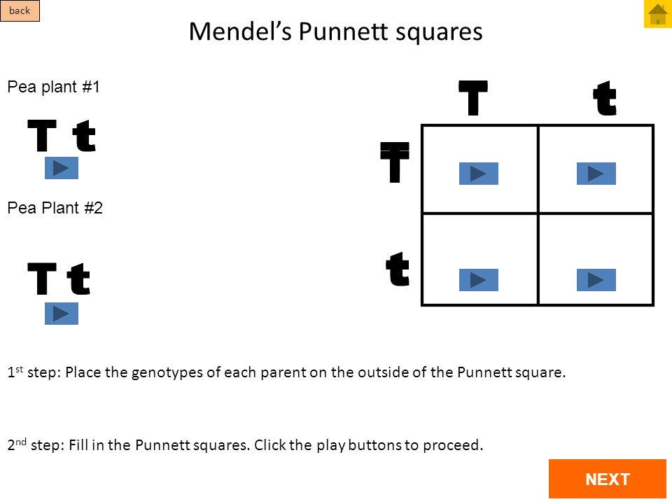 Mendel's Punnett squares