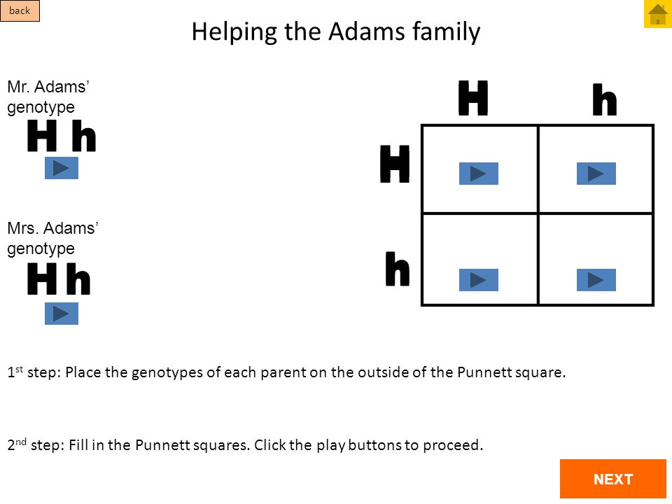 Helping the Adams family