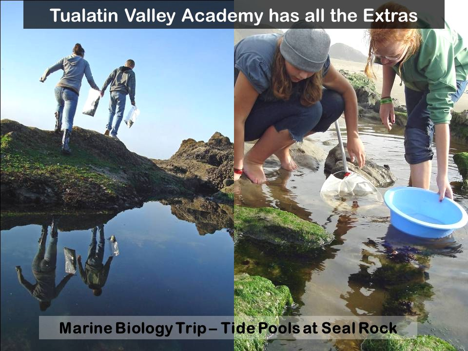 Marine Biology Trip – Tide Pools at Seal Rock