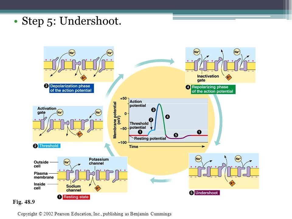 Step 5: Undershoot. Fig. 48.9.