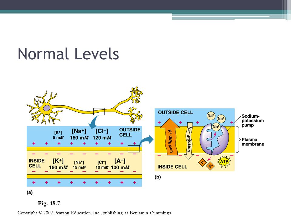 Normal Levels Fig. 48.7 Copyright © 2002 Pearson Education, Inc., publishing as Benjamin Cummings
