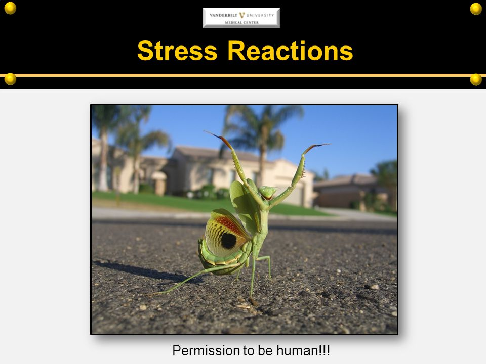 Stress Reactions Permission to be human!!!