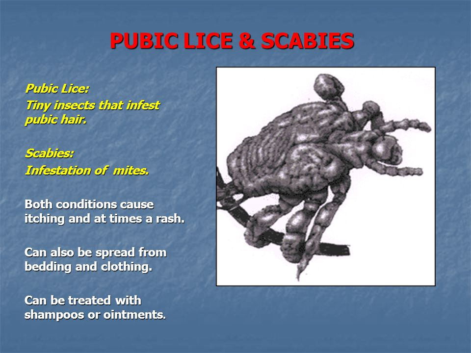 PUBIC LICE & SCABIES Pubic Lice: Tiny insects that infest pubic hair.