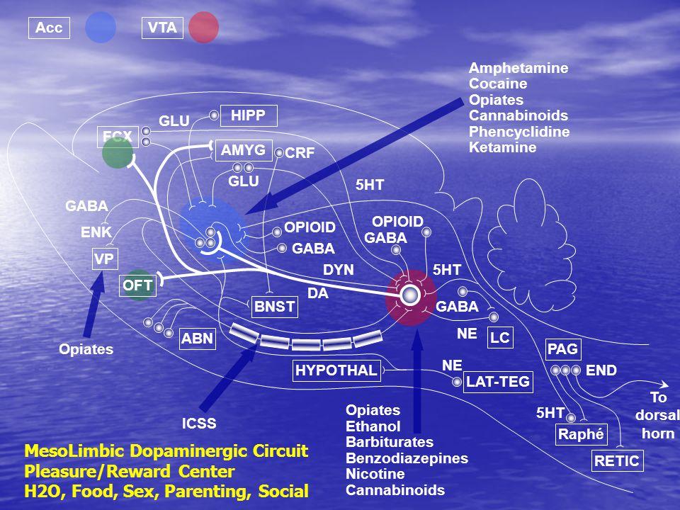 MesoLimbic Dopaminergic Circuit Pleasure/Reward Center