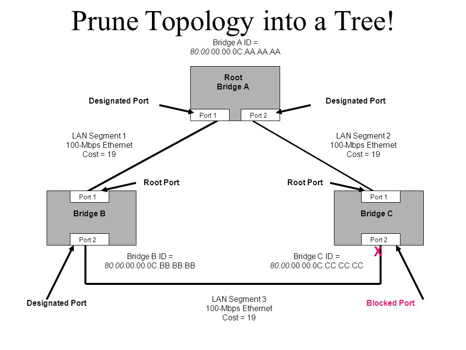 Prune Topology into a Tree!