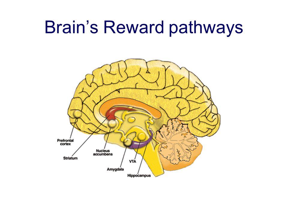 Brain's Reward pathways
