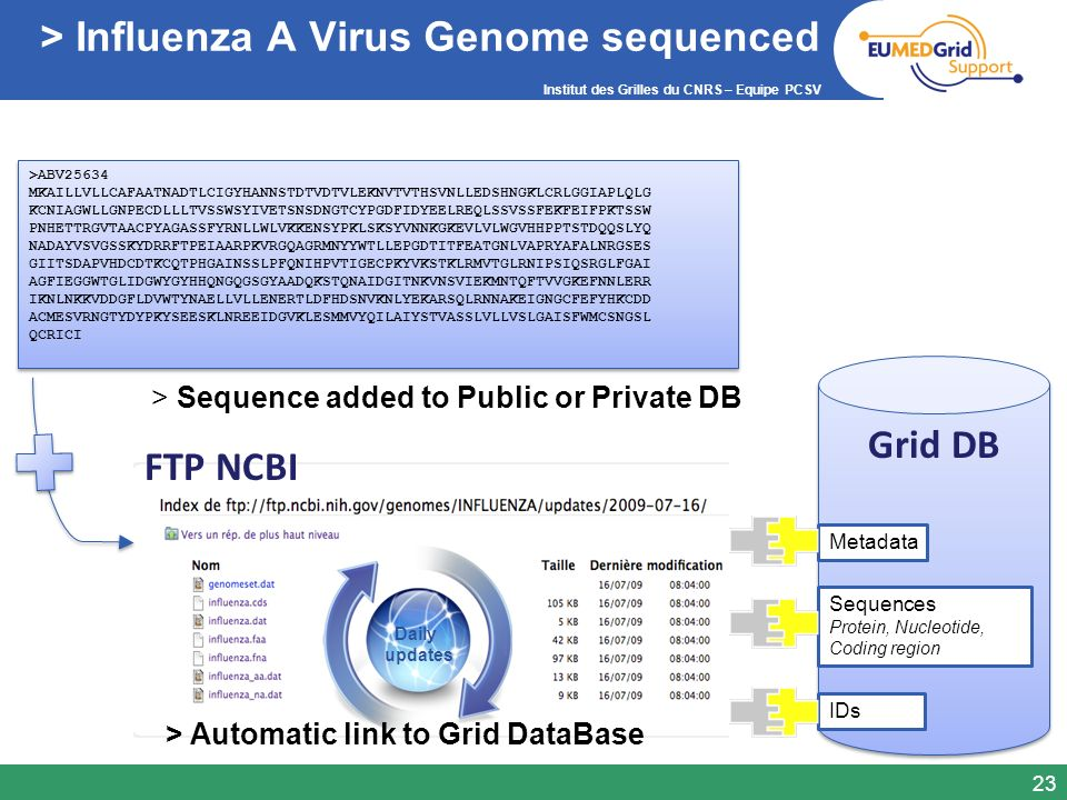 > Influenza A Virus Genome sequenced